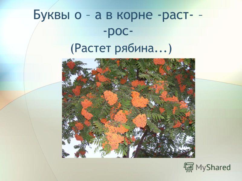 Буквы о – а в корне -раст- – -рос- (Растет рябина...)