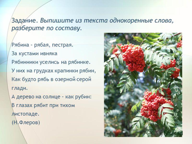 Задание. Выпишите из текста однокоренные слова, разберите по составу. Рябина – рябая, пестрая. За кустами ивняка Рябинники уселись на рябинке. У них на грудках крапинки рябин, Как будто рябь в озерной серой глади. А дерево на солнце – как рубин: В гл