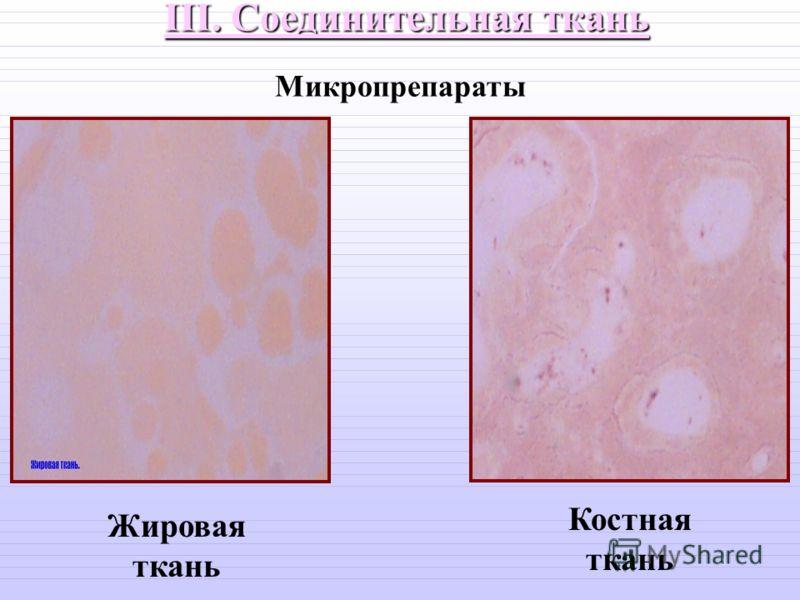 III. Соединительная ткань Жировая ткань Костная ткань Микропрепараты