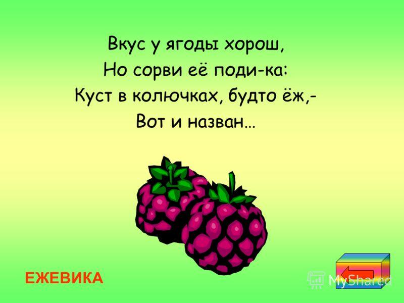 Вкус у ягоды хорош, Но сорви её поди-ка: Куст в колючках, будто ёж,- Вот и назван… ЕЖЕВИКА