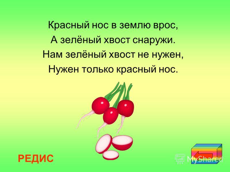 Красный нос в землю врос, А зелёный хвост снаружи. Нам зелёный хвост не нужен, Нужен только красный нос. РЕДИС