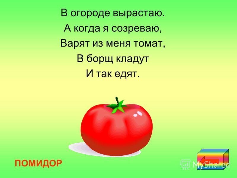 В огороде вырастаю. А когда я созреваю, Варят из меня томат, В борщ кладут И так едят. ПОМИДОР
