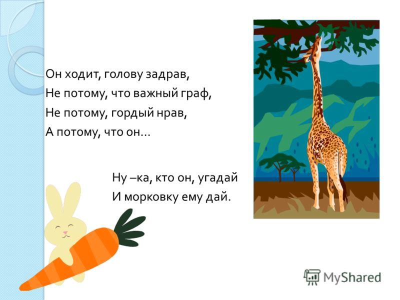Он ходит, голову задрав, Не потому, что важный граф, Не потому, гордый нрав, А потому, что он … Ну – ка, кто он, угадай И морковку ему дай.