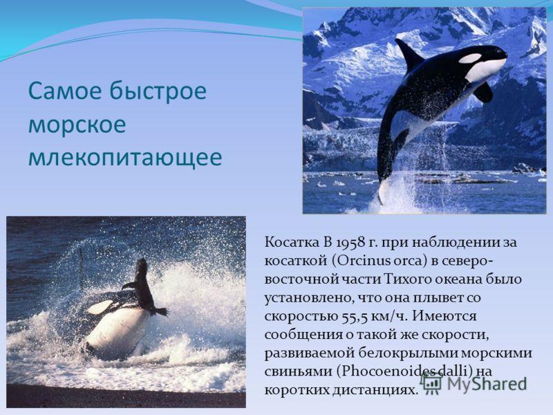 Самое быстрое морское млекопитающее Косатка В 1958 г. при наблюдении за косаткой (Orcinus orca) в северо- восточной части Тихого океана было установлено, что она плывет со скоростью 55,5 км/ч. Имеются сообщения о такой же скорости, развиваемой белокр