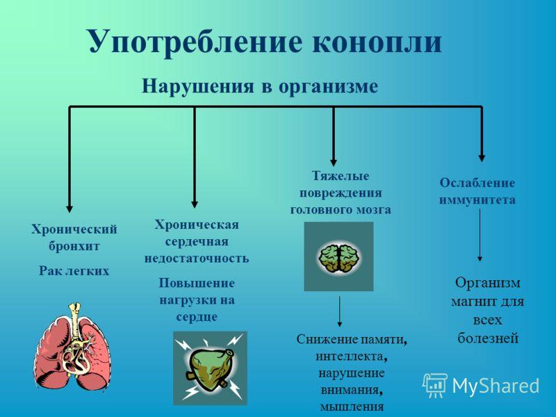Употребление конопли Хронический бронхит Рак легких Хроническая сердечная недостаточность Повышение нагрузки на сердце Тяжелые повреждения головного мозга Ослабление иммунитета Нарушения в организме Снижение памяти, интеллекта, нарушение внимания, мы