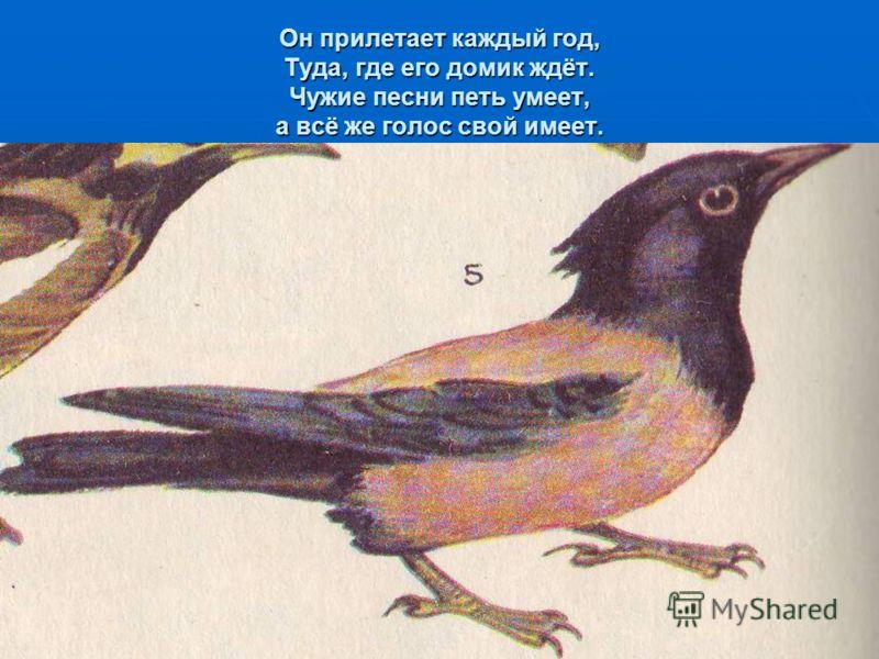 СИМВОЛЫ ВЕСНЫ Зиму эти птицы проводят на юге Зиму эти птицы проводят на юге По дороге к своим гнёздам они очень спешили, попадая в жестокие метели, многие выбивались в пути и погибали, первыми прилетели самые сильные По дороге к своим гнёздам они оче