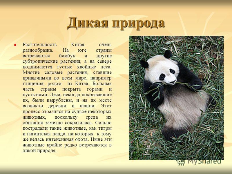 Дикая природа Растительность Китая очень разнообразна. На юге страны встречаются бамбук и другие субтропические растения, а на севере поднимаются густые хвойные леса. Многие садовые растения, ставшие привычными во всем мире, например глициния, родом