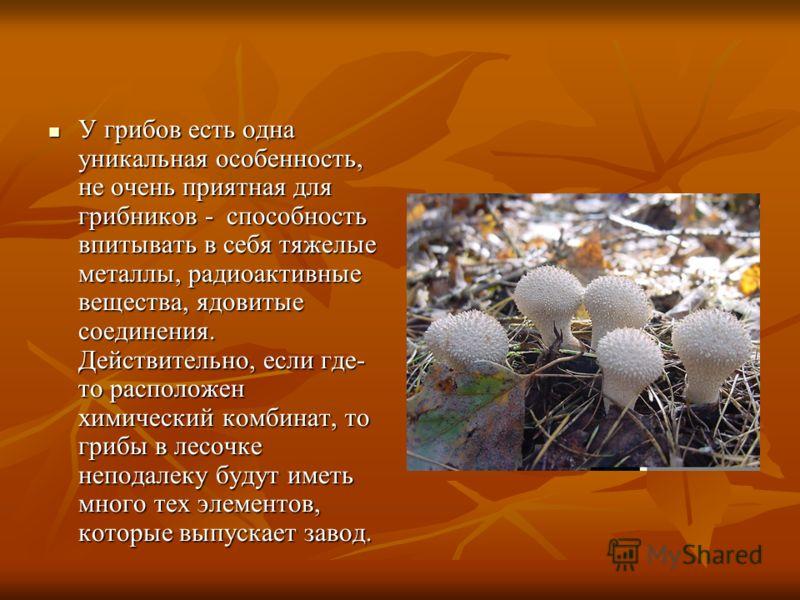 У грибов есть одна уникальная особенность, не очень приятная для грибников - способность впитывать в себя тяжелые металлы, радиоактивные вещества, ядовитые соединения. Действительно, если где- то расположен химический комбинат, то грибы в лесочке неп