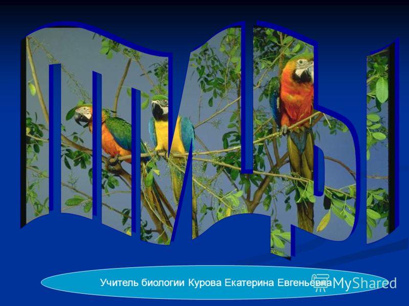 Учитель биологии Курова Екатерина Евгеньевна
