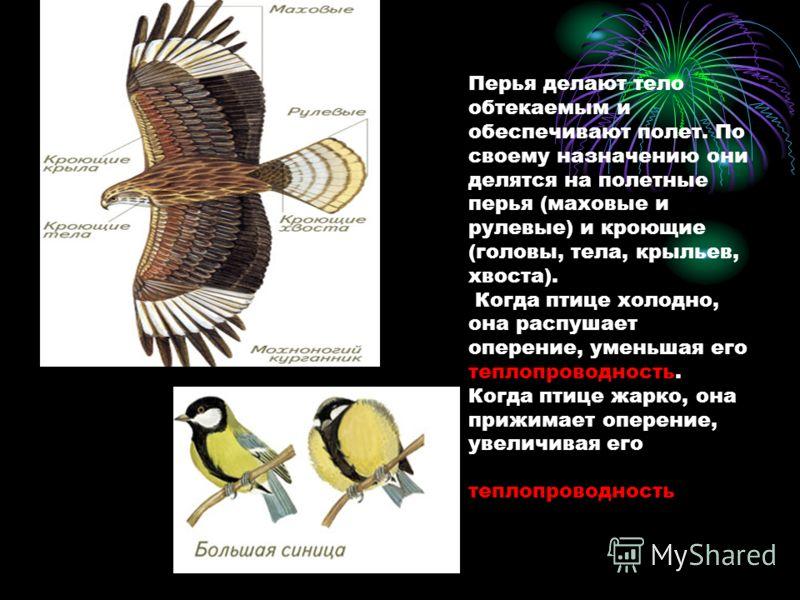 Перья делают тело обтекаемым и обеспечивают полет. По своему назначению они делятся на полетные перья (маховые и рулевые) и кроющие (головы, тела, крыльев, хвоста). Когда птице холодно, она распушает оперение, уменьшая его теплопроводность. Когда пти