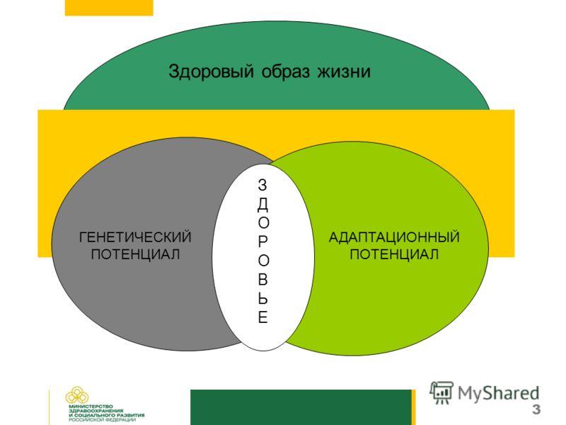 3 Здоровый образ жизни ЗДОРОВЬЕЗДОРОВЬЕ АДАПТАЦИОННЫЙ ПОТЕНЦИАЛ ГЕНЕТИЧЕСКИЙ ПОТЕНЦИАЛ