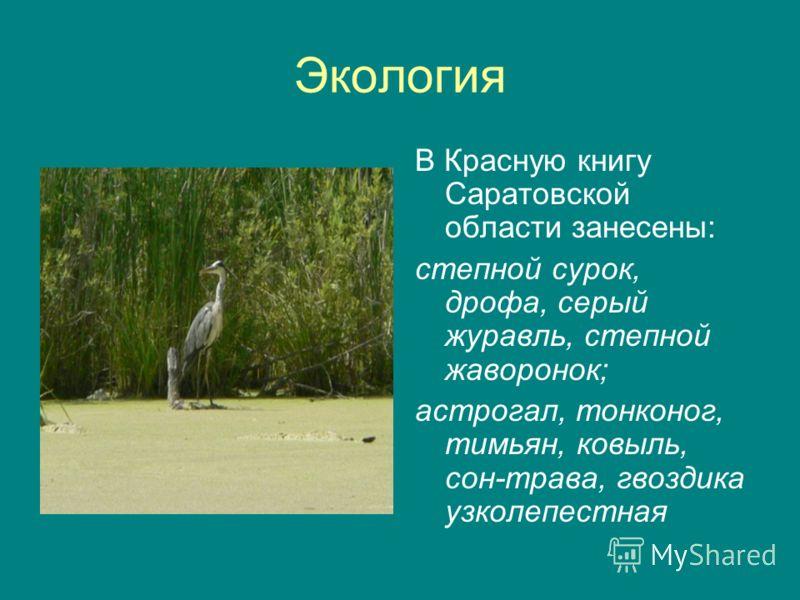 Экология В Красную книгу Саратовской области занесены: степной сурок, дрофа, серый журавль, степной жаворонок; астрогал, тонконог, тимьян, ковыль, сон-трава, гвоздика узколепестная