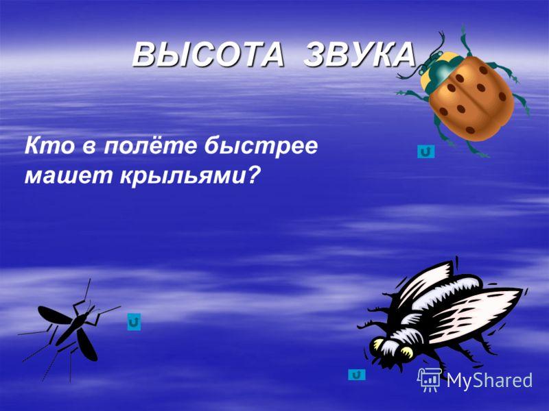 ВЫСОТА ЗВУКА Кто в полёте быстрее машет крыльями?