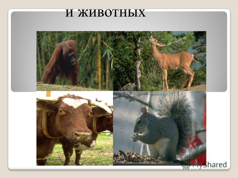 и животных