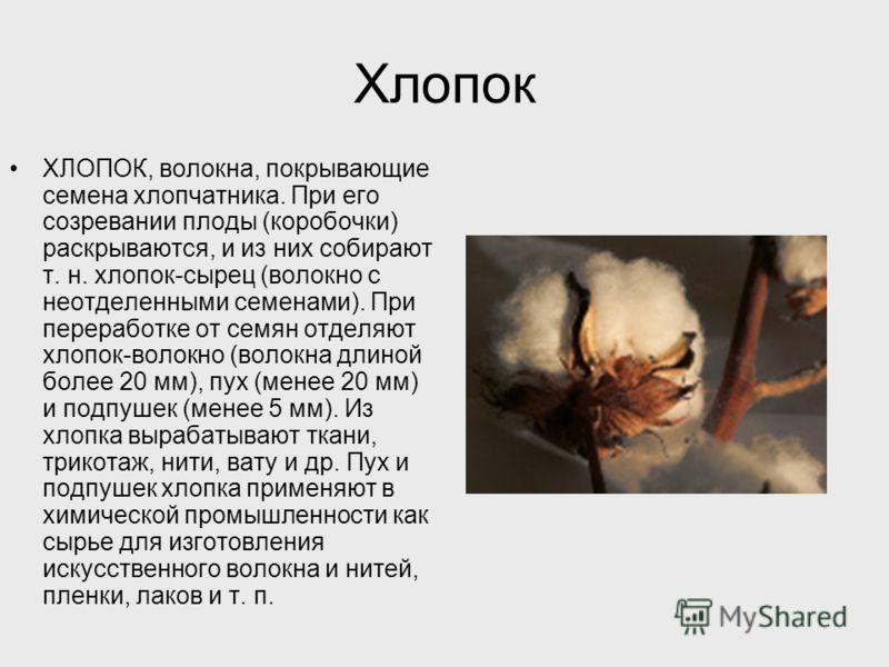 Хлопок ХЛОПОК, волокна, покрывающие семена хлопчатника. При его созревании плоды (коробочки) раскрываются, и из них собирают т. н. хлопок-сырец (волокно с неотделенными семенами). При переработке от семян отделяют хлопок-волокно (волокна длиной более