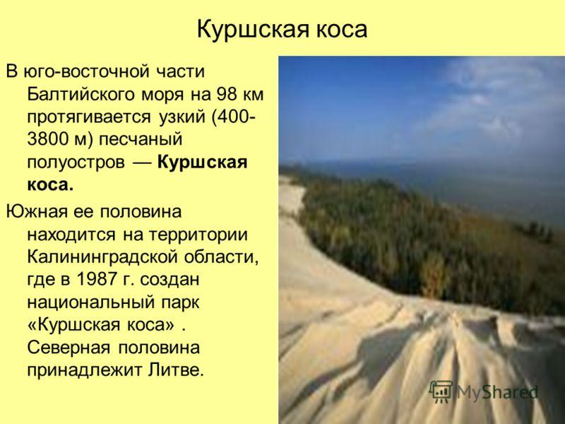 Куршская коса В юго-восточной части Балтийского моря на 98 км протягивается узкий (400- 3800 м) песчаный полуостров Куршская коса. Южная ее половина находится на территории Калининградской области, где в 1987 г. создан национальный парк «Куршская кос