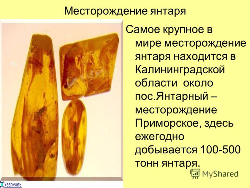Месторождение янтаря Самое крупное в мире месторождение янтаря находится в Калининградской области около пос.Янтарный – месторождение Приморское, здесь ежегодно добывается 100-500 тонн янтаря.