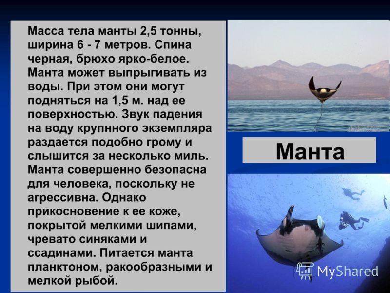 Хрящевые рыбы автор лабунец ольга