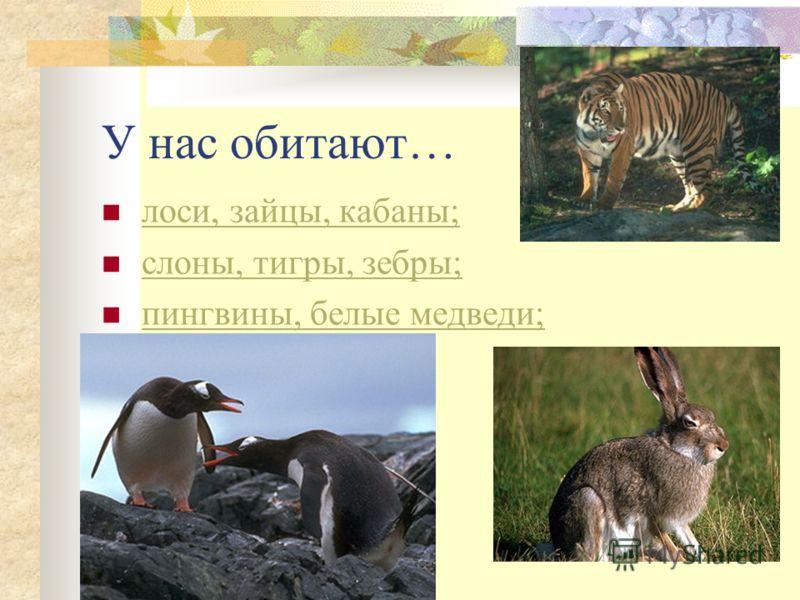 У нас обитают… лоси, зайцы, кабаны; слоны, тигры, зебры; пингвины, белые медведи;