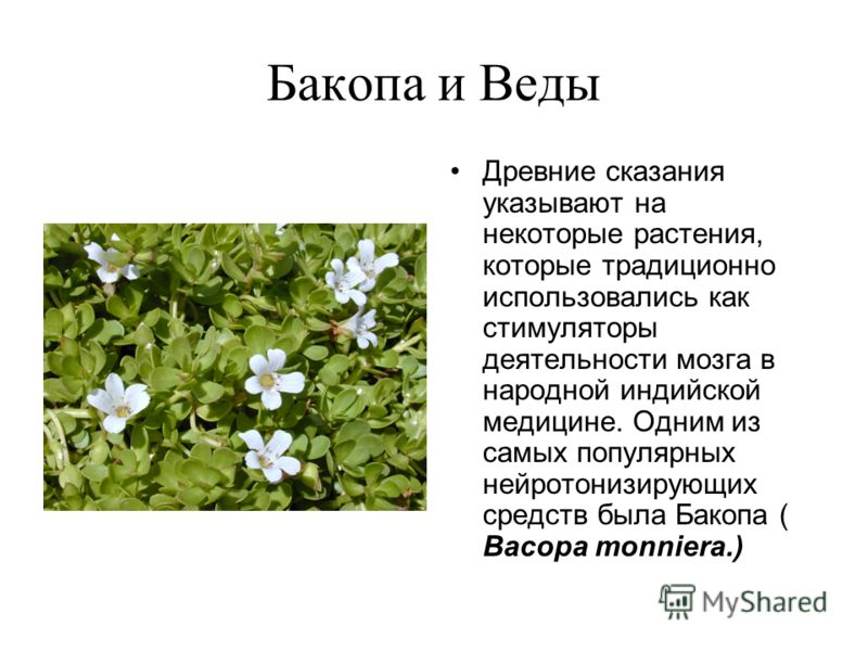 Бакопа и Веды Древние сказания указывают на некоторые растения, которые традиционно использовались как стимуляторы деятельности мозга в народной индийской медицине. Одним из самых популярных нейротонизирующих средств была Бакопа ( Bacopa monniera.)
