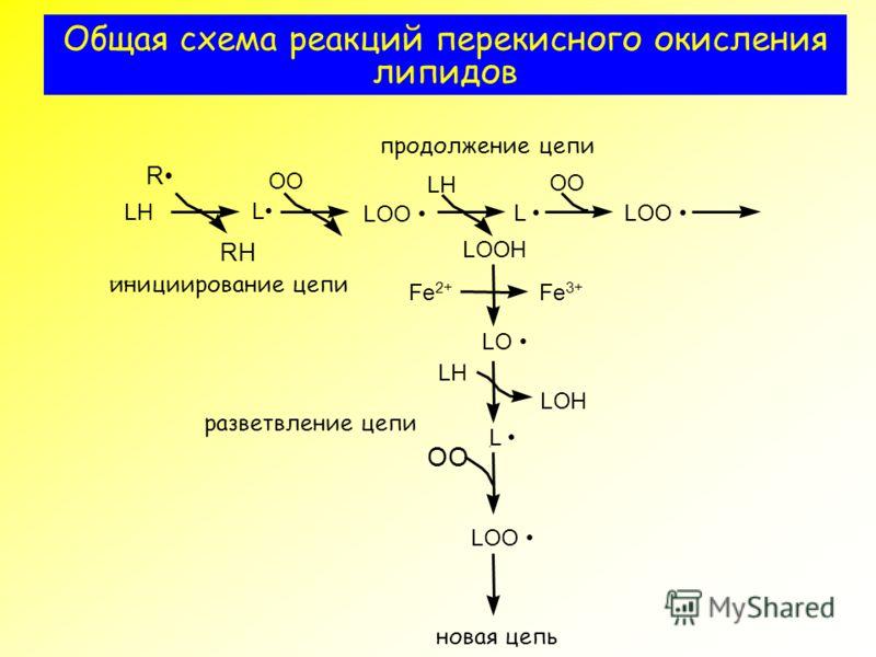 Общая схема реакций перекисного окисления липидов ?????????? ??? RH OO LOO LH LOH LOOH R L L LOO LH LO Fe 2+ OO L LOO LH инициирование цепи OO продолжение цепи разветвление цепи L Fe 3+ новая цепь