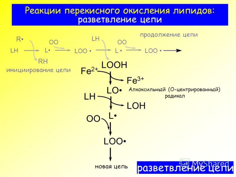 Реакции перекисного окисления липидов: разветвление цепи ?????????? ??? RH OO LOO LH LOH LOOH R L L LOO LH LO Fe 2+ OO L LOO LH инициирование цепи OO продолжение цепи разветвление цепи L Fe 3+ новая цепь Алкоксильный (О-центрированный) радикал