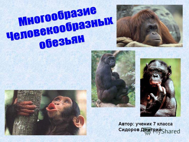 Автор: ученик 7 класса Сидоров Дмитрий