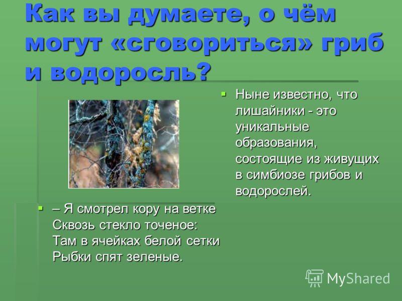 Как вы думаете, о чём могут «сговориться» гриб и водоросль? Ныне известно, что лишайники - это уникальные образования, состоящие из живущих в симбиозе грибов и водорослей. Ныне известно, что лишайники - это уникальные образования, состоящие из живущи