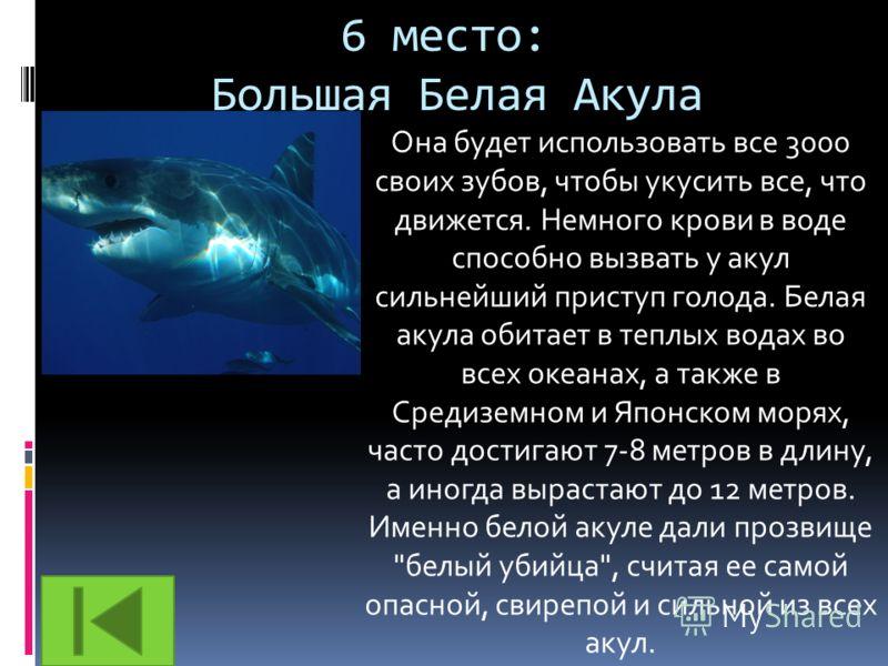 6 место: Большая Белая Акула Она будет использовать все 3000 своих зубов, чтобы укусить все, что движется. Немного крови в воде способно вызвать у акул сильнейший приступ голода. Белая акула обитает в теплых водах во всех океанах, а также в Средиземн