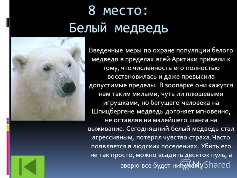 8 место: Белый медведь Введенные меры по охране популяции белого медведя в пределах всей Арктики привели к тому, что численность его полностью восстановилась и даже превысила допустимые пределы. В зоопарке они кажутся нам таким милыми, чуть ли плюшев