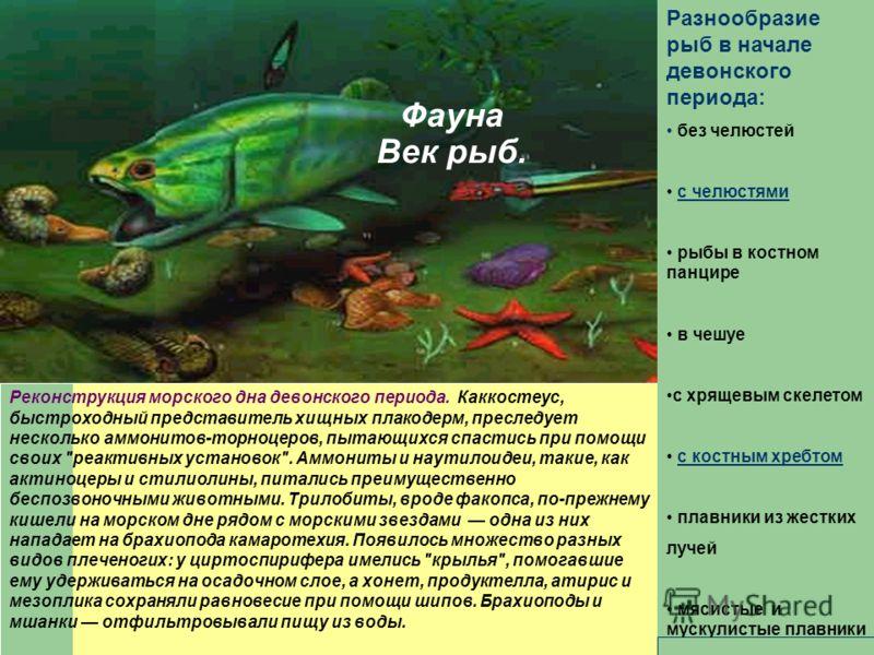 Фауна Век рыб. Реконструкция морского дна девонского периода. Каккостеус, быстроходный представитель хищных плакодерм, преследует несколько аммонитов-торноцеров, пытающихся спастись при помощи своих