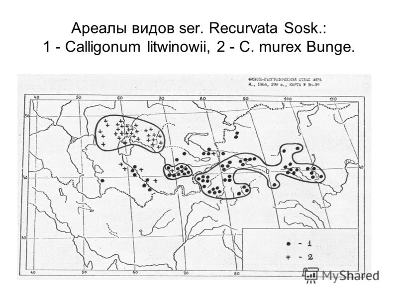 Ареалы видов ser. Recurvata Sosk.: 1 - Calligonum litwinowii, 2 - C. murex Bunge.