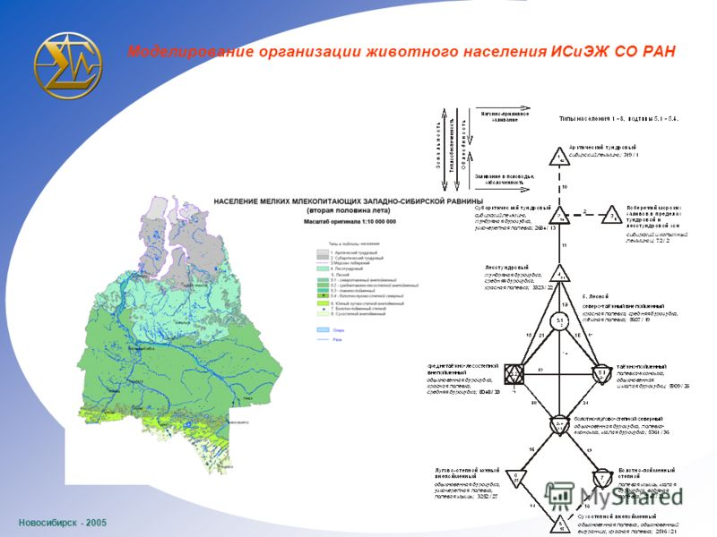 Новосибирск - 2005 Моделирование организации животного населения ИСиЭЖ СО РАН