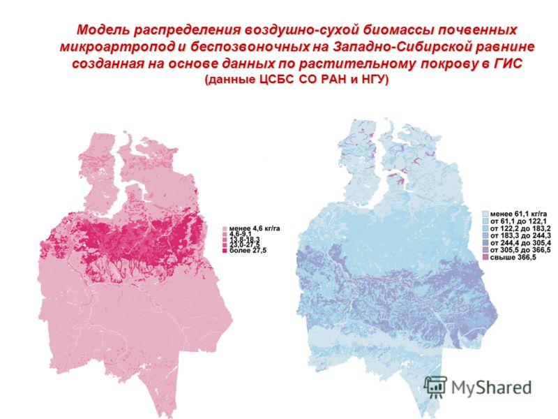 Модель распределения воздушно-сухой биомассы почвенных микроартропод и беспозвоночных на Западно-Сибирской равнине созданная на основе данных по растительному покрову в ГИС (данные ЦСБС СО РАН и НГУ)