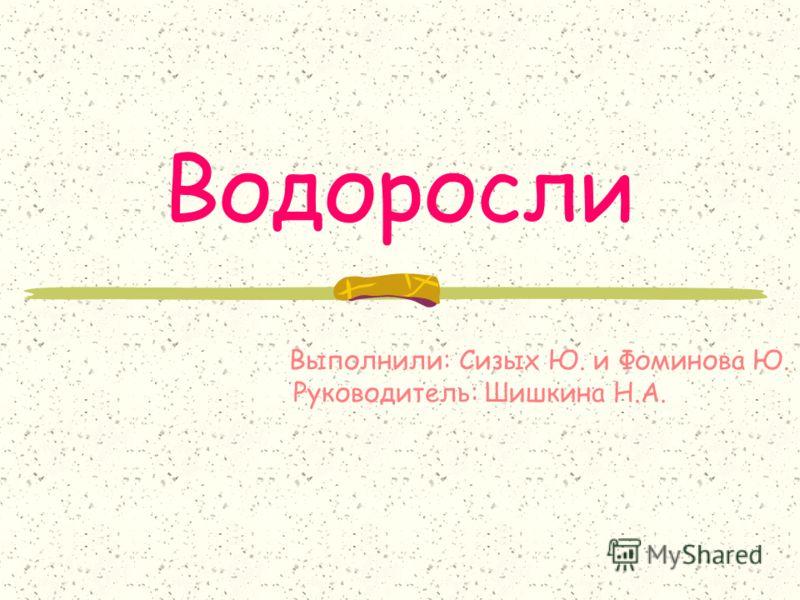 Водоросли Выполнили: Сизых Ю. и Фоминова Ю. Руководитель: Шишкина Н.А.