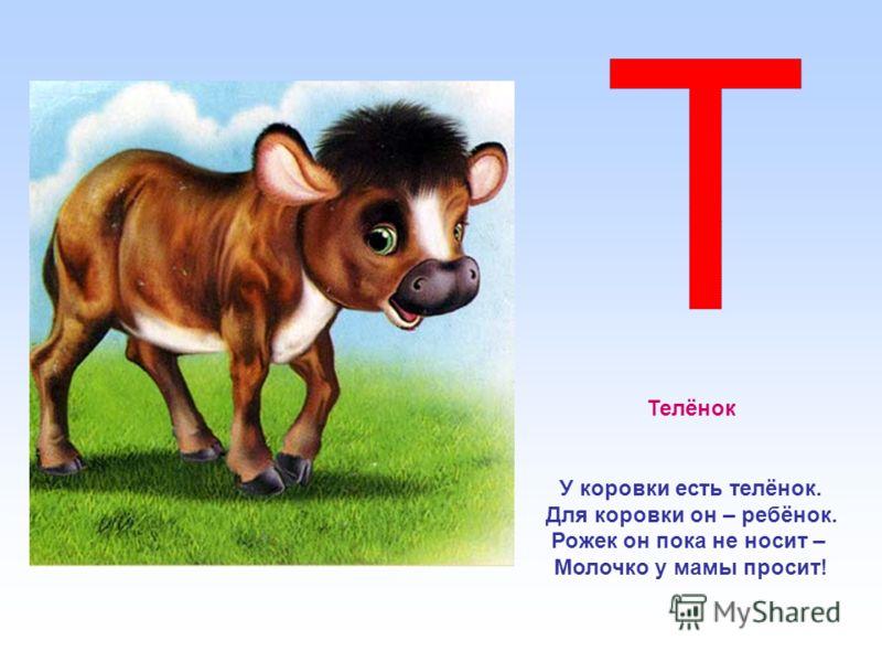Телёнок У коровки есть телёнок. Для коровки он – ребёнок. Рожек он пока не носит – Молочко у мамы просит!