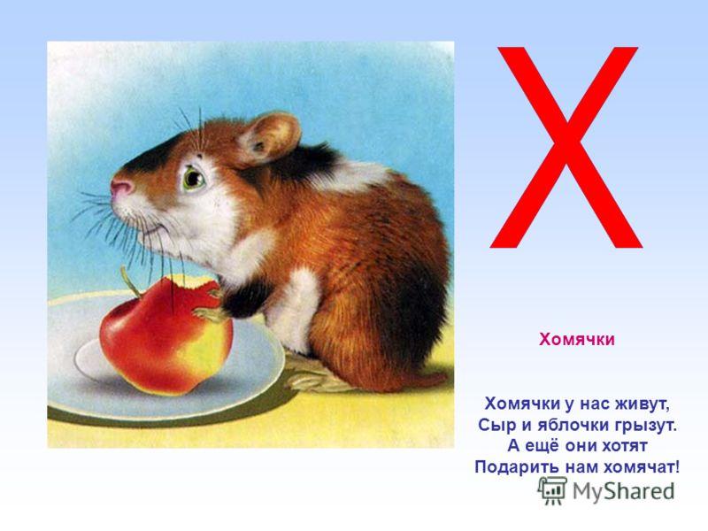 Хомячки Хомячки у нас живут, Сыр и яблочки грызут. А ещё они хотят Подарить нам хомячат!