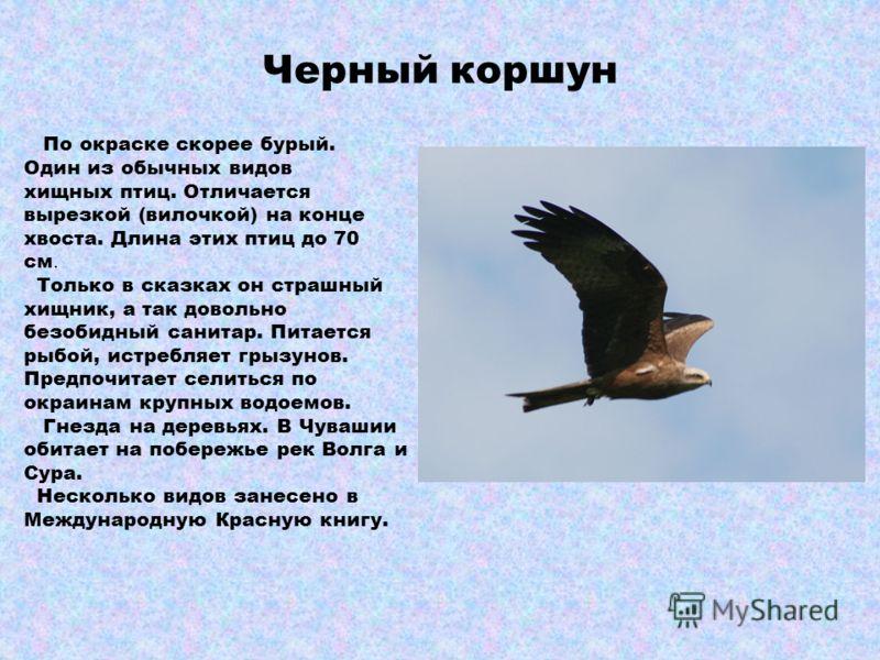 СОВА СОВЫ ночные хищные птицы. Голова большая, глаза крупные. Клюв сильный, с режущими краями. Крылья широкие, ноги сильные, когти длинные, острые. У многих видов на голове «ушки» из удлиненных перьев. Сова серо- бурых тонов. Полет бесшумный. Самки к