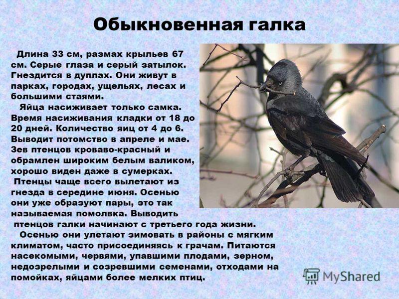 Перелётные птицы Летом больше корма и меньше хищников. Птицы зимой улетают в более теплые страны. Под воздействием гормонов происходит изменение поведения птиц возникает перелетное состояние. Во время перелетов птицы днем ориентируются по солнцу и ме