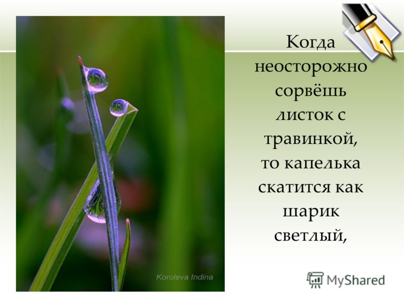 Когда неосторожно сорвёшь листок с травинкой, то капелька скатится как шарик светлый,