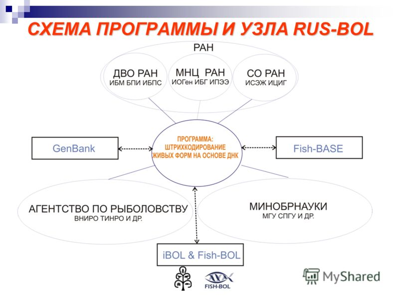 СХЕМА ПРОГРАММЫ И УЗЛА RUS-BOL