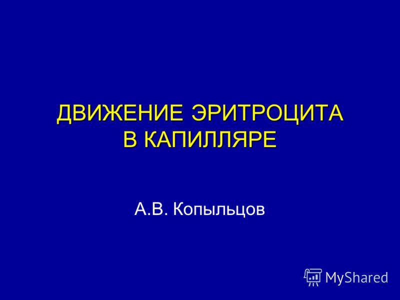 ДВИЖЕНИЕ ЭРИТРОЦИТА В КАПИЛЛЯРЕ А.В. Копыльцов