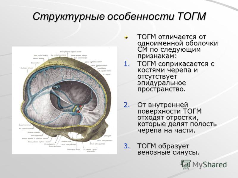 Структурные особенности ТОГМ ТОГМ отличается от одноименной оболочки СМ по следующим признакам: 1.ТОГМ соприкасается с костями черепа и отсутствует эпидуральное пространство. 2.От внутренней поверхности ТОГМ отходят отростки, которые делят полость че