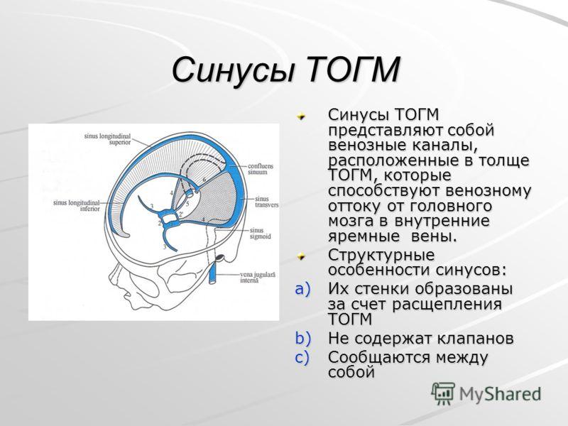 Синусы ТОГМ Синусы ТОГМ представляют собой венозные каналы, расположенные в толще ТОГМ, которые способствуют венозному оттоку от головного мозга в внутренние яремные вены. Структурные особенности синусов: a)Их стенки образованы за счет расщепления ТО