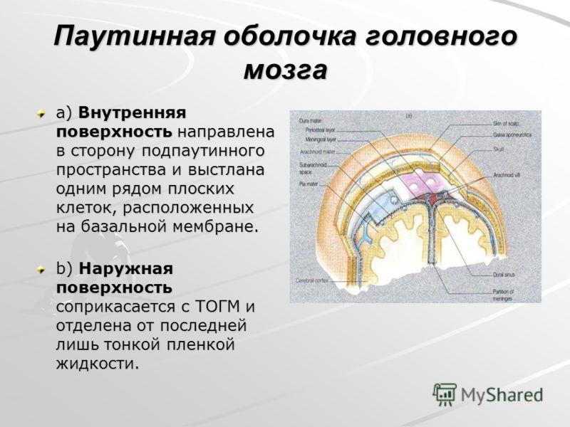 Паутинная оболочка головного мозга a) Внутренняя поверхность направлена в сторону подпаутинного пространства и выстлана одним рядом плоских клеток, расположенных на базальной мембране. b) Наружная поверхность соприкасается с ТОГМ и отделена от послед