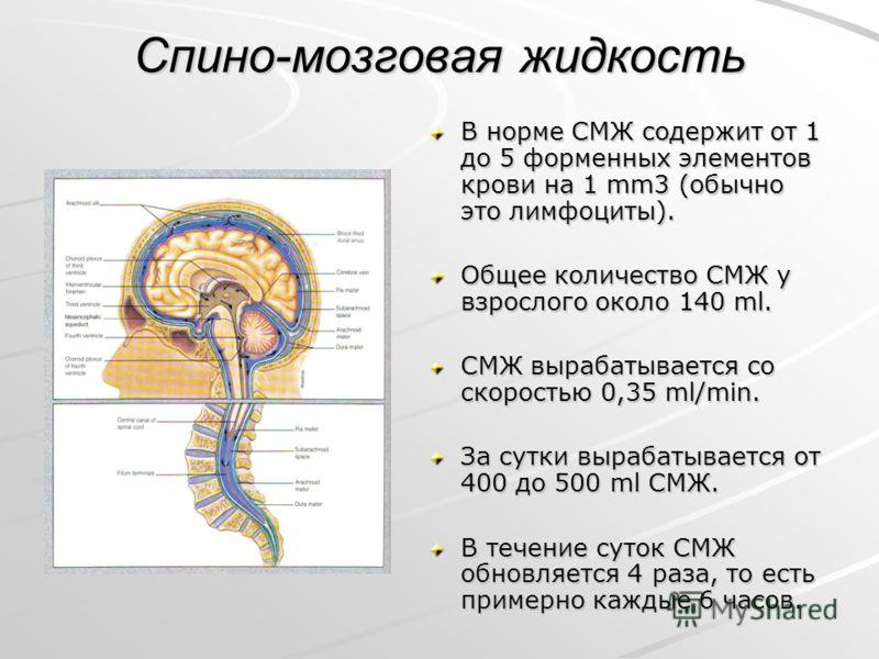 Спино-мозговая жидкость В норме СМЖ содержит от 1 до 5 форменных элементов крови на 1 mm3 (обычно это лимфоциты). Общее количество СМЖ у взрослого около 140 ml. СМЖ вырабатывается со скоростью 0,35 ml/min. За сутки вырабатывается от 400 до 500 ml СМЖ