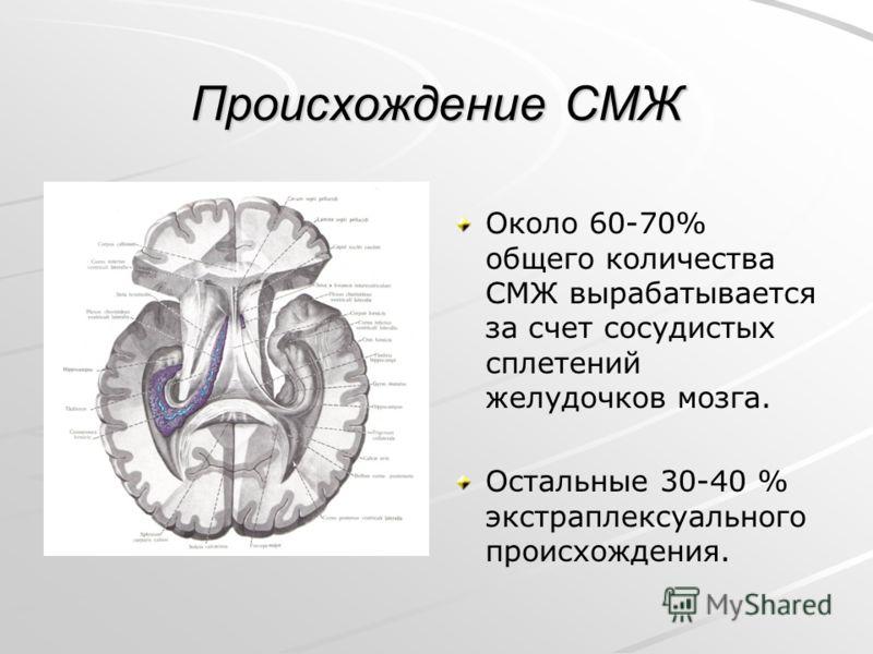 Происхождение СМЖ Около 60-70% общего количества СМЖ вырабатывается за счет сосудистых сплетений желудочков мозга. Остальные 30-40 % экстраплексуального происхождения.