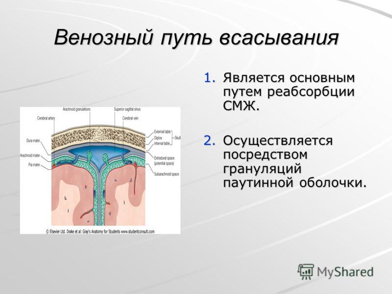 Венозный путь всасывания 1.Является основным путем реабсорбции СМЖ. 2.Осуществляется посредством грануляций паутинной оболочки.