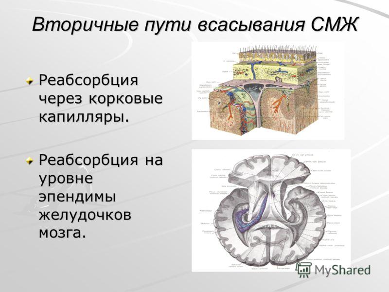 Вторичные пути всасывания СМЖ Реабсорбция через корковые капилляры. Реабсорбция на уровне эпендимы желудочков мозга.