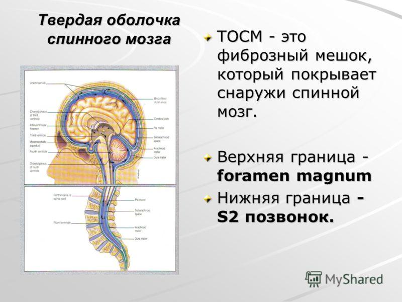 Твердая оболочка спинного мозга ТОСМ - это фиброзный мешок, который покрывает снаружи спинной мозг. Верхняя граница - foramen magnum Нижняя граница - S2 позвонок.
